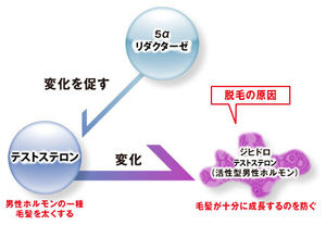 5αリダクターゼ、テストステロンの変化、ジビドロテストステロン