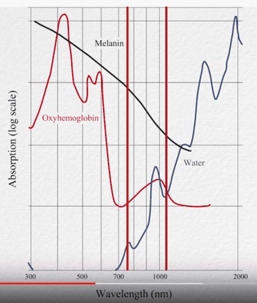 波長の長さとメラニン