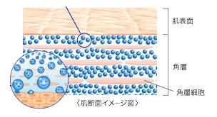 水分量がたっぷりある角層